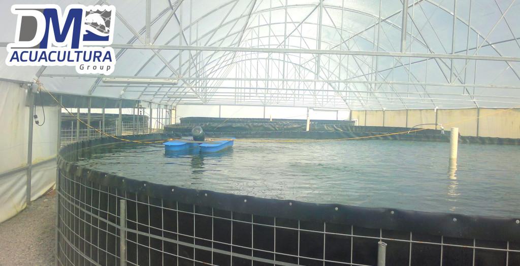 Ems dm acuacultura for Criadero de camaron en estanques circulares