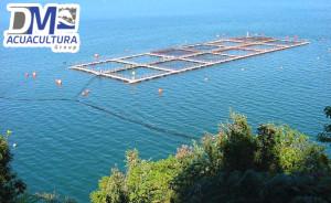 jaula_flotante_acuicola_mar abierto_dm_acuacultura_dmtecnologias_1