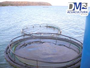 jaula_flotante_acuicola_mar abierto_dm_acuacultura_dmtecnologias_3