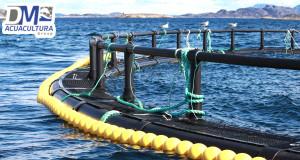 Jaulas o encierros acuicolas para criadero de salm n for Construccion de jaulas flotantes para tilapia