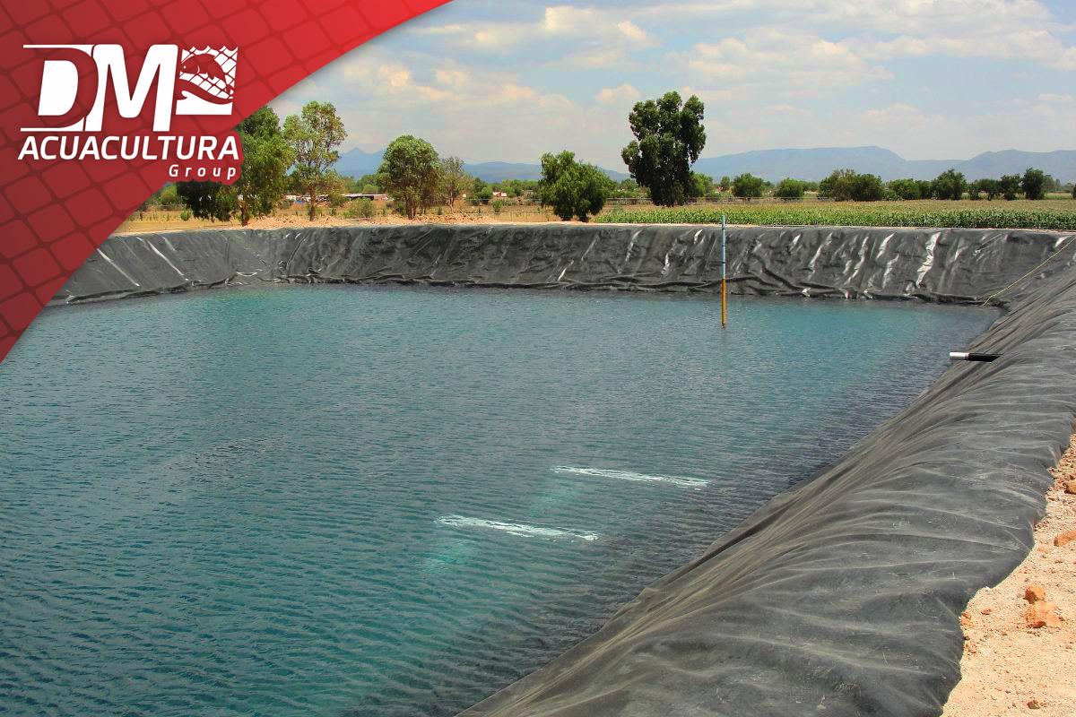 Geomembrana para estanques acu colas dm acuacultura for Geomembrana para estanques de agua